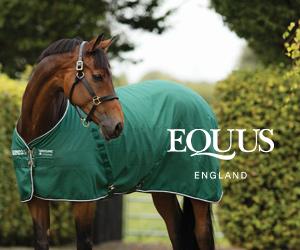 Equus (West Wales Horse)